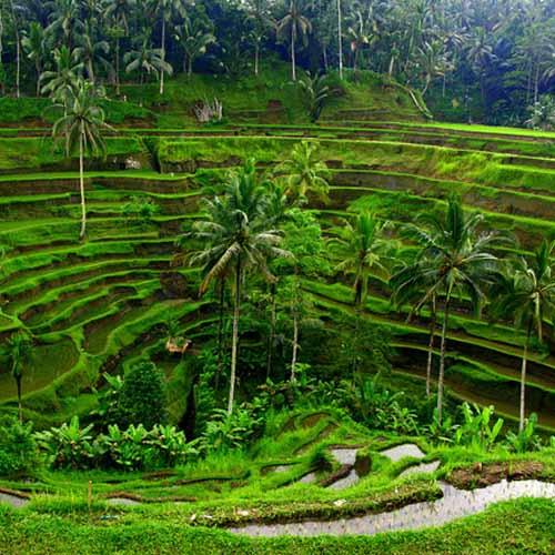 Balinese Nature